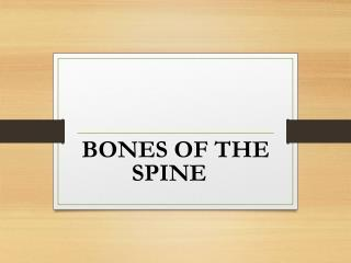 BONES OF THE SPINE