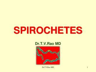 SPIROCHETES