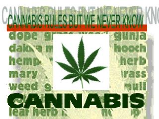 CANNABIS RULES BUT WE NEVER KNOW
