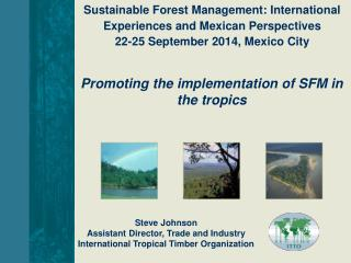 Steve Johnson Assistant Director, Trade and Industry International Tropical Timber Organization