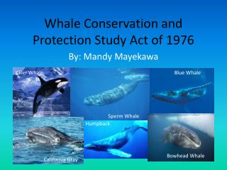 Whale Conservation and Protection Study Act of 1976