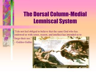 The Dorsal Column-Medial Lemniscal System