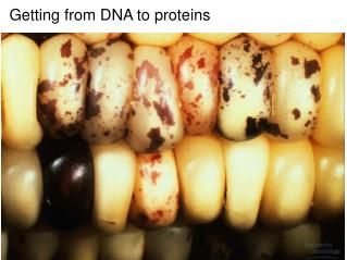 Getting from DNA to proteins