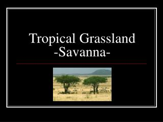 Tropical Grassland -Savanna-