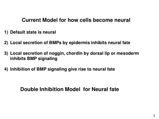 Current Model for how cells become neural Default state is neural