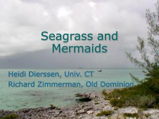 Seagrass and Mermaids
