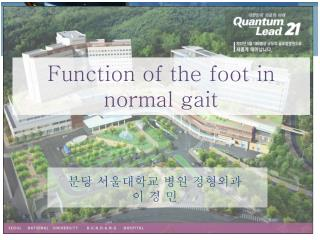 Function of the foot in normal gait