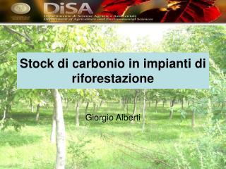 Stock di carbonio in impianti di riforestazione