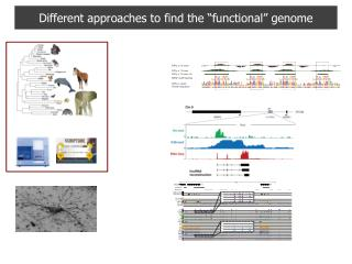 "Different approaches to find the ""functional"" genome"