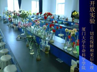 开放实验 切花保鲜和采后生理 厦门大学生命科学学院