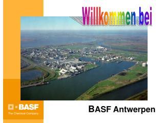 B ASF Antwerpen