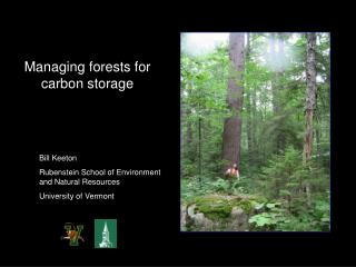 Managing forests for carbon storage