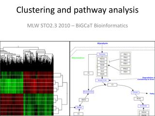 Clustering and pathway analysis