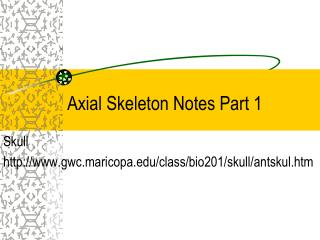 Axial Skeleton Notes Part 1