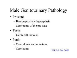 Male Genitourinary Pathology