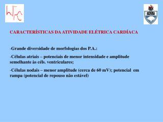 CARACTERÍSTICAS DA ATIVIDADE ELÉTRICA CARDÍACA Grande diversidade de morfologias dos P.A.: