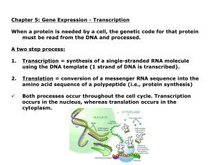 Chapter 5: Gene Expression - Transcription