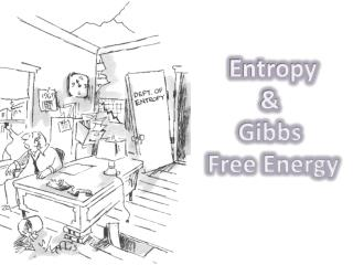 Entropy &  Gibbs  Free Energy