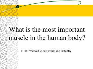 What is the most important muscle in the human body? Hint:  Without it, we would die instantly!