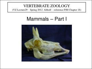Mammals – Part I