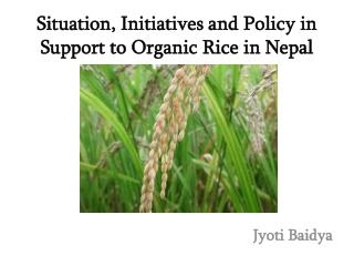 Situation , Initiatives and Policy in Support to Organic  Rice in Nepal