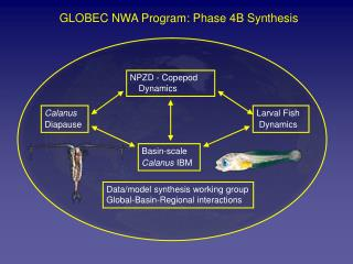 GLOBEC NWA Program: Phase 4B Synthesis