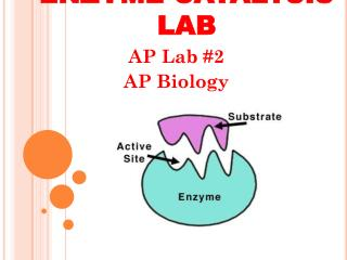 ENZYME CATALYSIS LAB