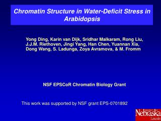 Chromatin Structure in Water-Deficit Stress in Arabidopsis
