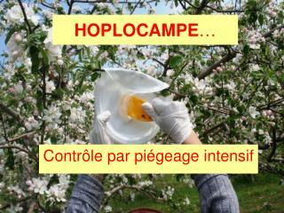 HOPLOCAMPE …