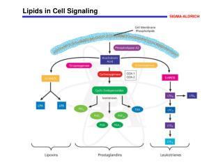 Lipids in Cell Signaling