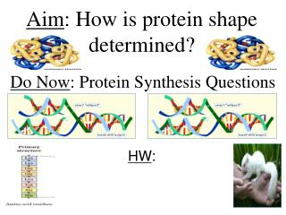 Aim : How is protein shape determined?