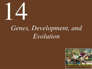 Genes, Development, and Evolution