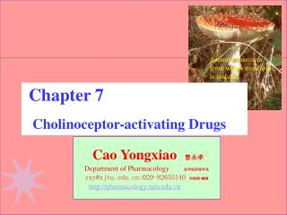 Cao Yongxiao 曹永孝 Department of Pharmacology 医学院药理学系 yxy@xjtu;029-82655140 科教楼 805