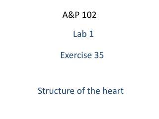 A&P 102