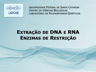 Extração de DNA e RNA Enzimas de Restrição