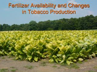 Fertilizer Availability and Changes in Tobacco Production
