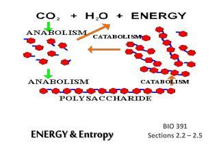 ENERGY & Entropy