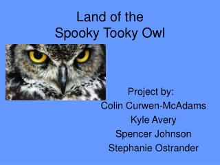 Land of the Spooky Tooky Owl