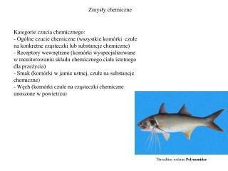 Zmysły chemiczne