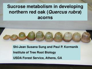 Sucrose metabolism in developing northern red oak ( Quercus rubra ) acorns
