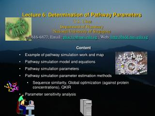 Content Example of pathway simulation work and map Pathway simulation model and equations