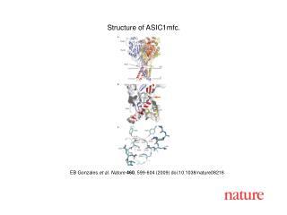 EB Gonzales et al. Nature 460 , 599-604 (2009) doi:10.1038/nature08218