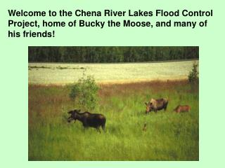 Welcome to the Chena River Lakes Flood Control Project, home of Bucky the Moose, and many of his friends!