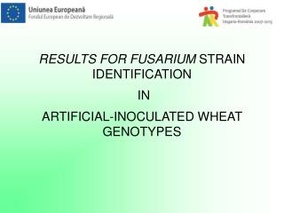 RESULTS FOR FUSARIUM STRAIN IDENTIFICATION IN ARTIFICIAL-INOCULATED WHEAT GENOTYPES