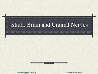 Skull, Brain and Cranial Nerves