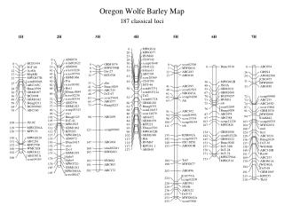 Oregon Wolfe Barley Map 187 classical loci