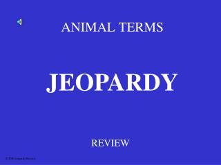 ANIMAL TERMS