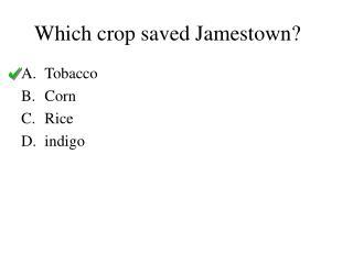 Which crop saved Jamestown?