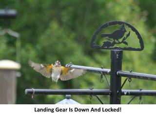 Landing Gear Is Down And Locked!