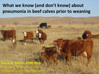 What we know (and don't know) about pneumonia in beef calves prior to weaning